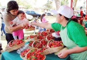 la-expo-frutilla-de-aregua-se-traslada-desde-hoy-hasta-manana-en-el-shopping-mariano-_595_411_224282